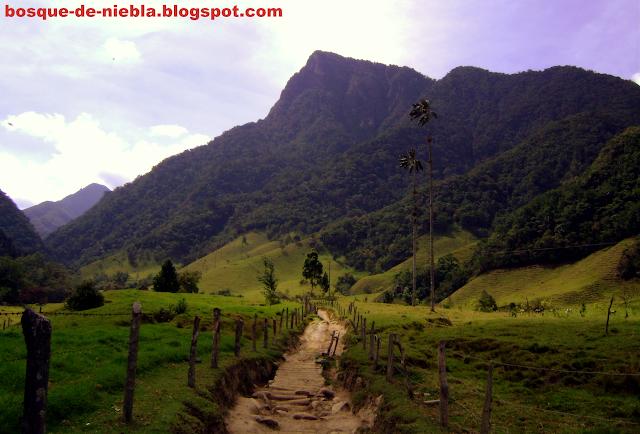 cerro morrogacho, valle de cocora