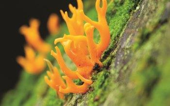 Wallpaper: Fungus