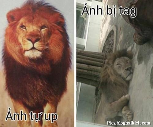 Ảnh sư tử hài