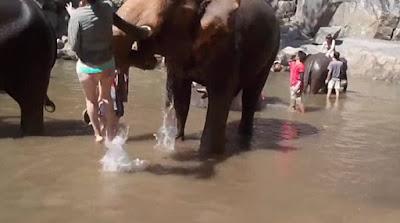 Τουρίστρια πήγε να χαϊδέψει ελέφαντα και... απογειώθηκε!