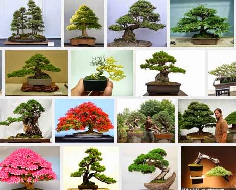 galeri bonsai