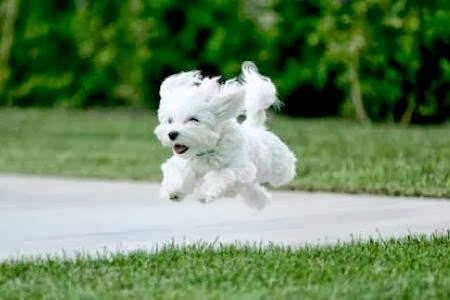 Cute Puppy And Dog Cute Small Dog Running