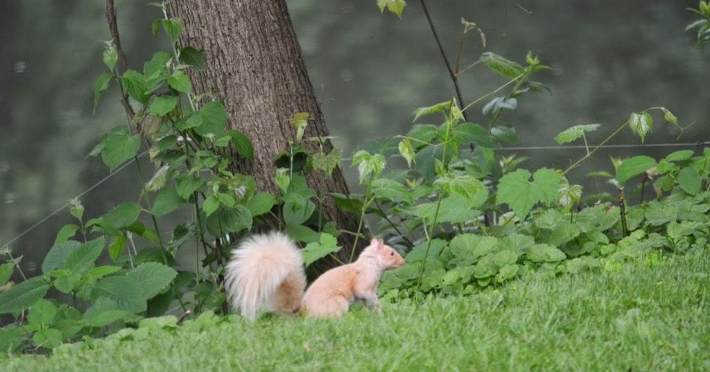 Ran Over Squirrel Road