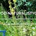 Jak zrobić ogród naturalistyczny?