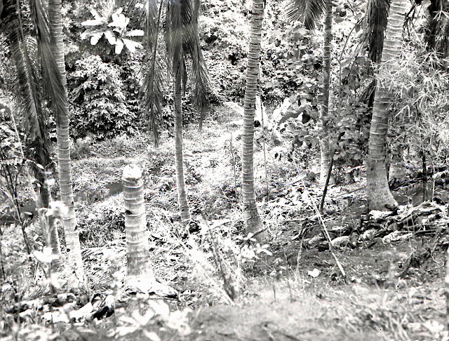 Inhabitants of Lipa, Batangas killed by Japanese soldiers in 1945 and left to decompose in the open.  Image source:  United States National Archives.