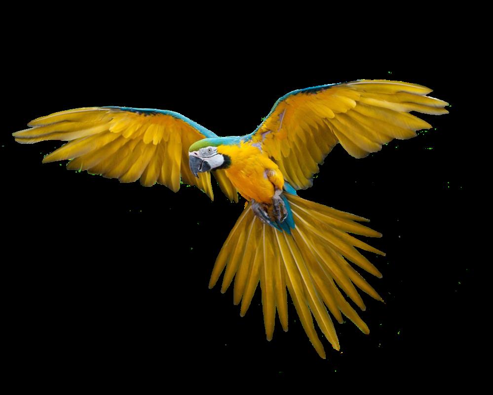 Bahan Edit Foto format .png (Burung)