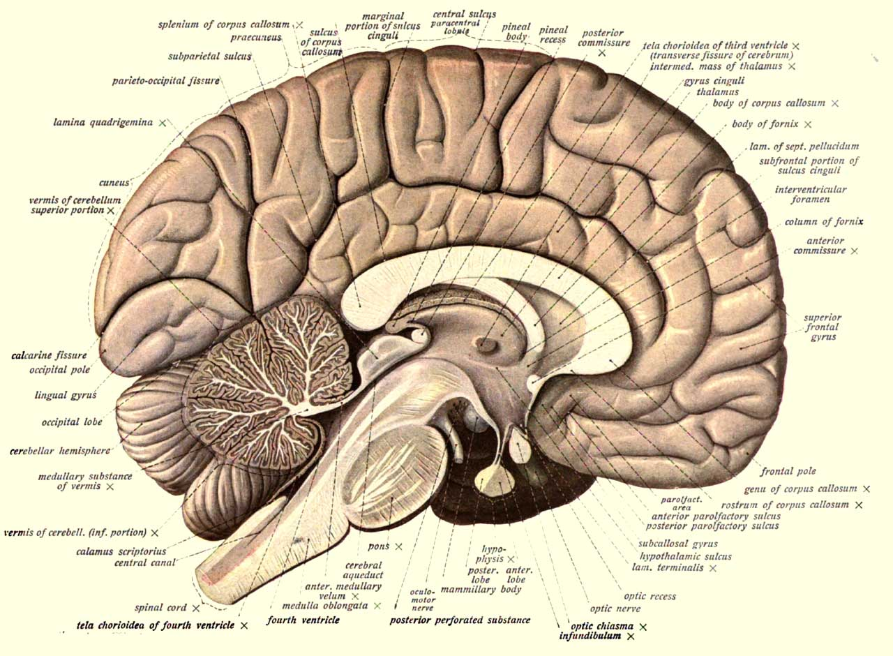 100 Fascinating Facts About The Human Brain According To Science