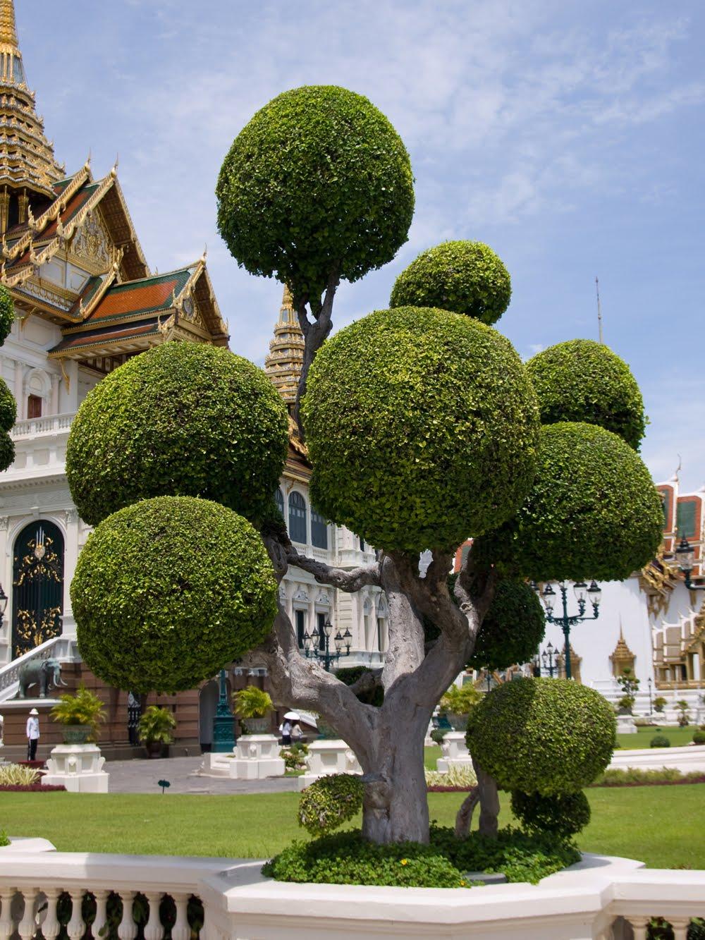 Arbol Frente Al Templo Del Gran Palacio En Bangkok Tailandia
