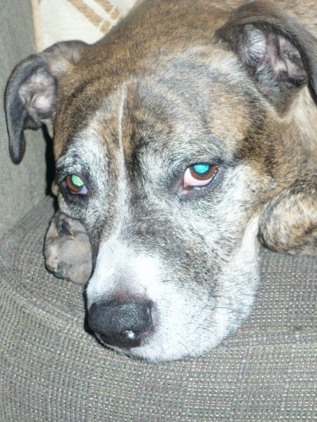 Dog Seizure Trouble Walking