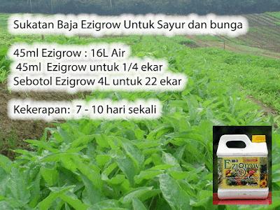 4 Liter Baja Ezigrow untuk 22 Ekar Sayur