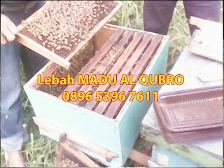 Jual madu asli Surabaya, Jual Madu Asli di Surabaya Murah