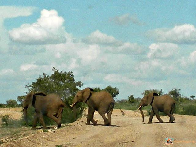 safari, safari tsavo est, kenya, safari kenya, elefanti, alefanti safari, elefanti liberi