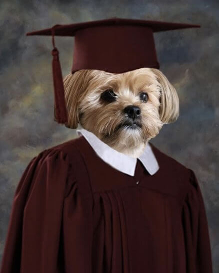 This Cute Dog Proves That Pets Are Parts Of The Family By Getting His Own Graduation Picture