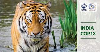 Spotlight : India To Host UN Wildlife Summit In 2020