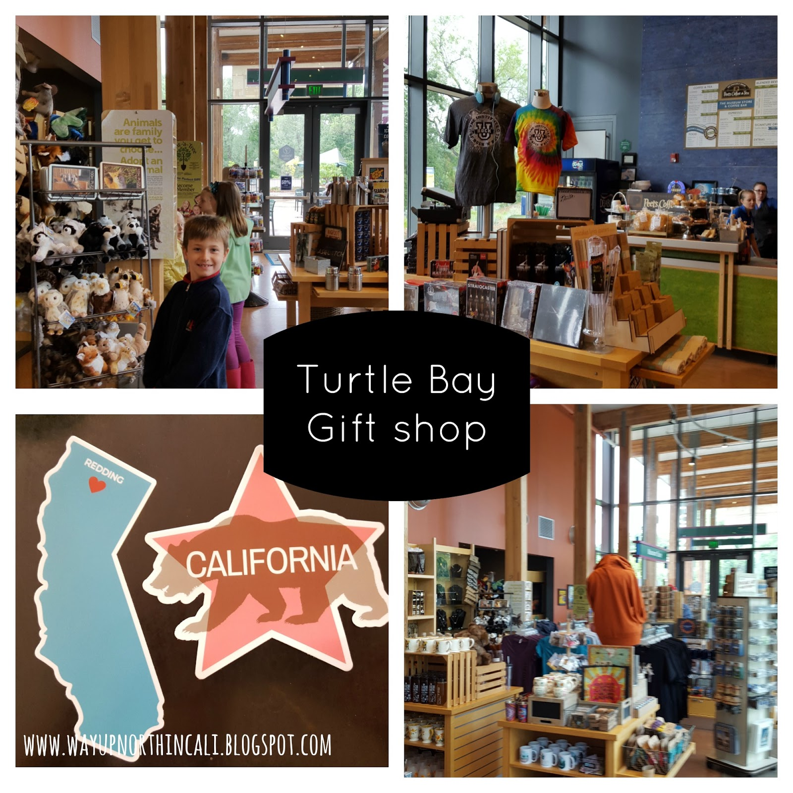 Way Up North In Cali A Look At Turtle Bay Museum Through