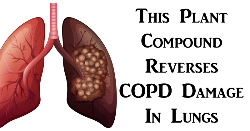 This Plant Compound Reverses COPD Damage In Lungs, According To Research