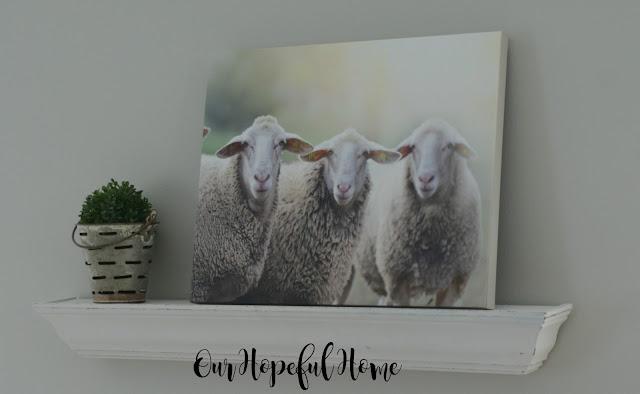 sheep canvas olive bucket boxwood ball
