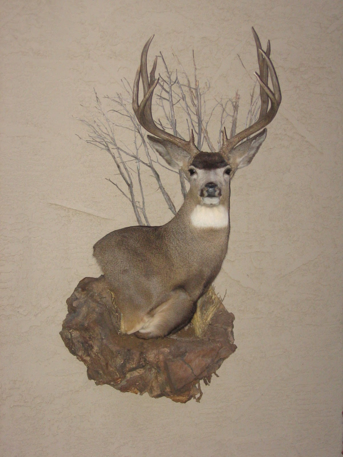 Game Trail Taxidermy January 2013