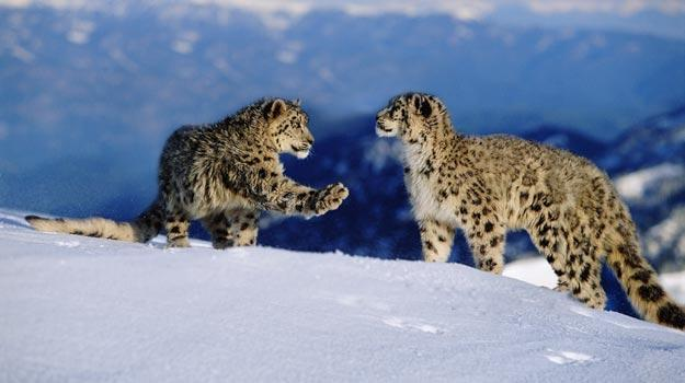 Trek to Leh and Ladakh