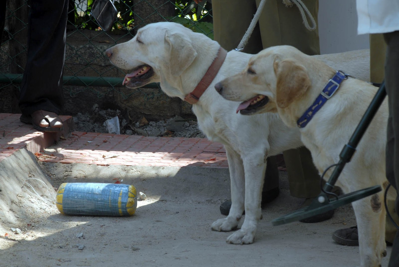 Bomb defused in bangalore dating 4