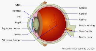 Bagian mata manusia dan fungsinya