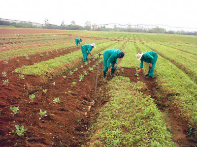 BOA disburses N2.4bn loan to farmers