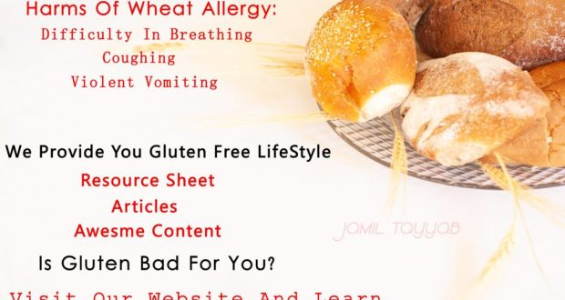 Gluten Intolerance With Wheat