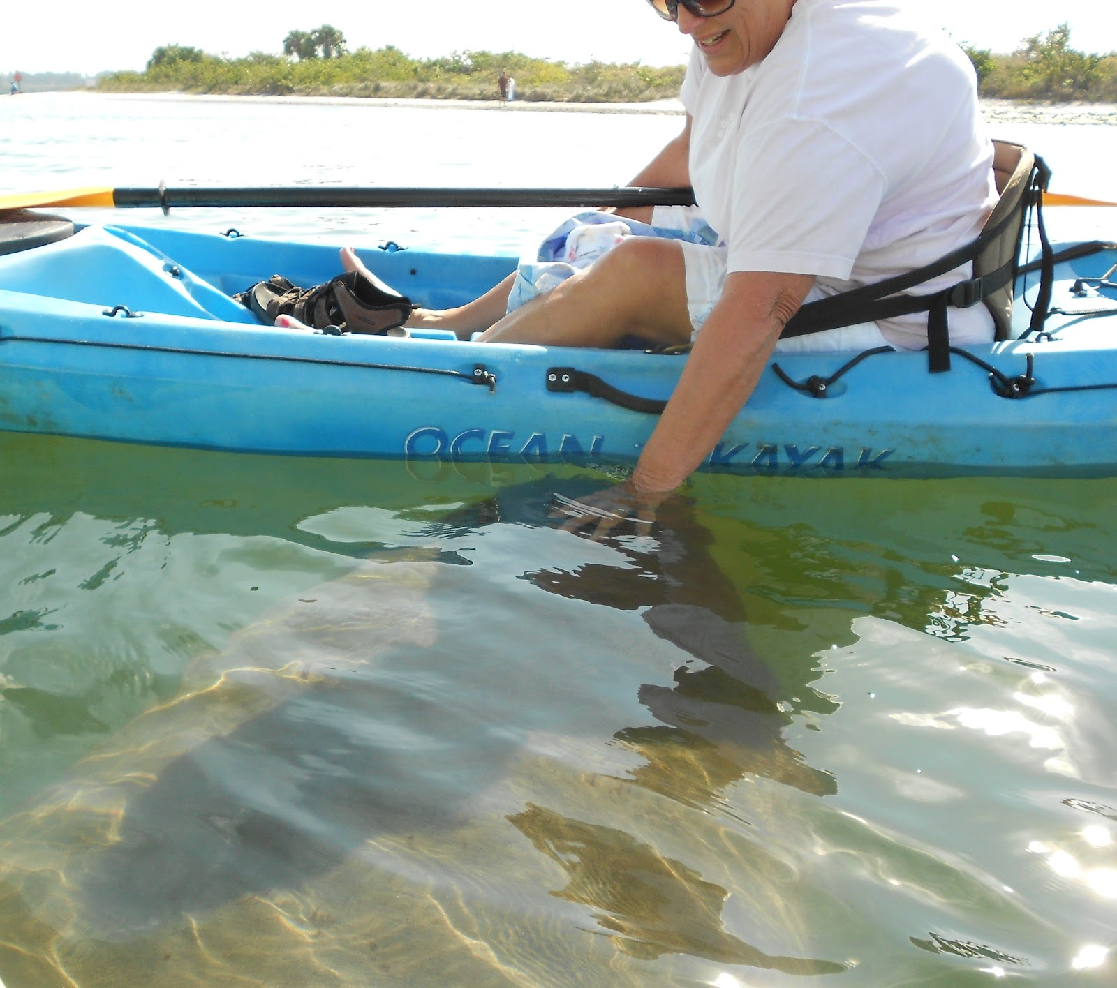 Kayaking With The Manatees At Apollo Beach