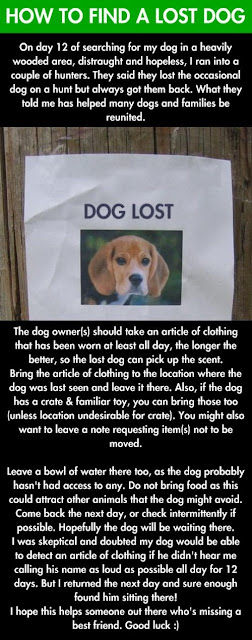 how to find lost dog