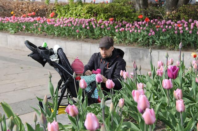 Oslo keväällä tulppaanit