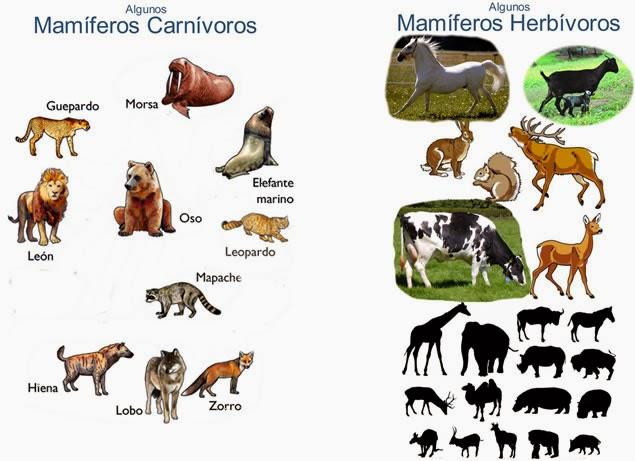carnivoro, herbivoro, mamifero, ciencia, naturaleza, terrestre, cuadrupedo, educacion, basica, biologia