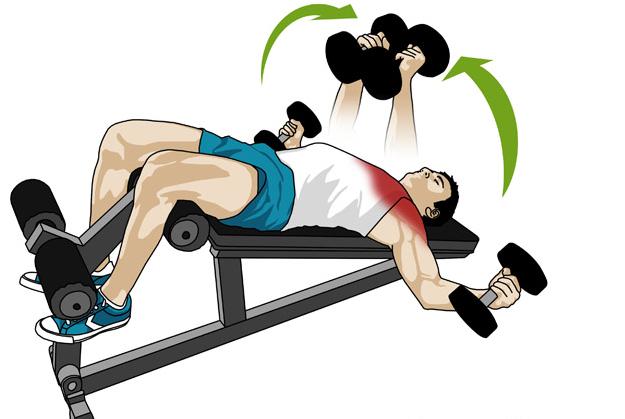 Musculation et fitness cart s d clin s avec halt res - Pectoraux developpe couche ...