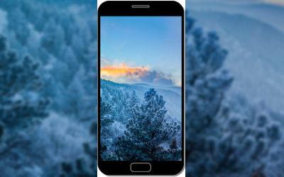 Forêt en Hiver avec Brouillard - Fond d'Écran en QHD pour Mobile