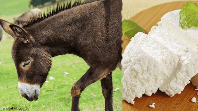 أنواع الجبن في العالم