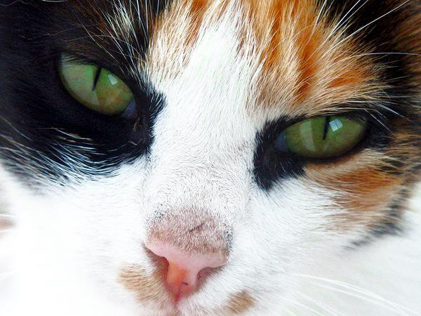 multi-colored cat beautiful