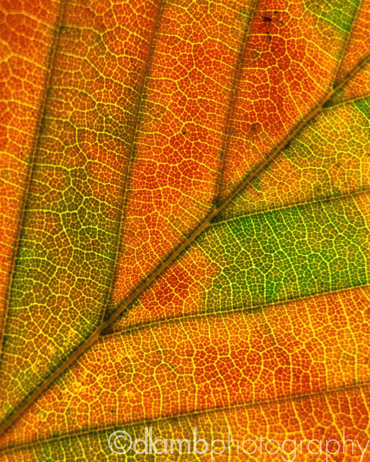 http://david-lamb.artistwebsites.com/featured/autumn-foliage-macro-3-david-lamb.html