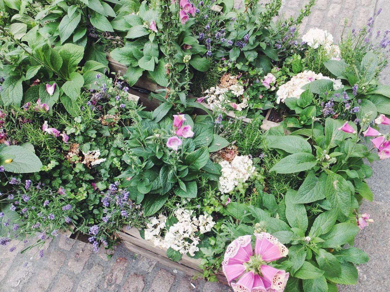 Covent-Garden-Flowers