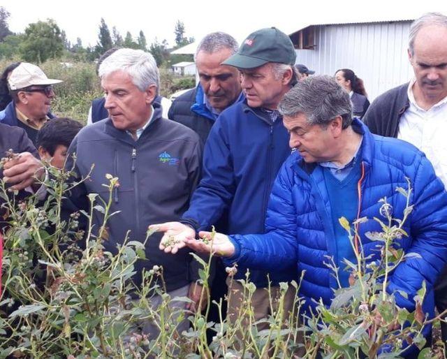 Ministerio de Agricultura mantiene subsidio para contratar seguros del agro
