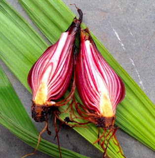 Flavonoid dalam umbi bawang sabrang (Eleutheurine palmifolia L.)  sebagai zat anti kanker .