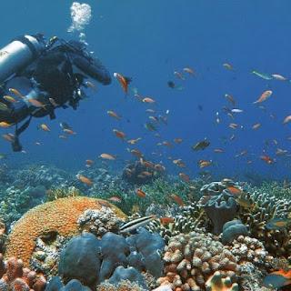 Pesona Bawah Laut Taman Nasional Taka Bonerate, Kabupaten Kepulauan Selayar Photo by @deevo1973