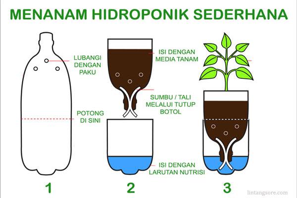 menanam hidroponik dengan botol bekas
