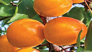 nectacotum fruit images wallpaper