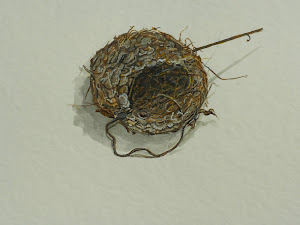 Hummingbird Nest at my etsy shop