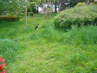 山田池公園 花木園の猫