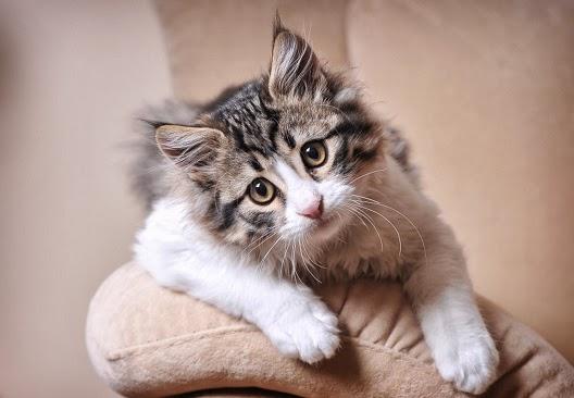 Koty i remont mieszkania