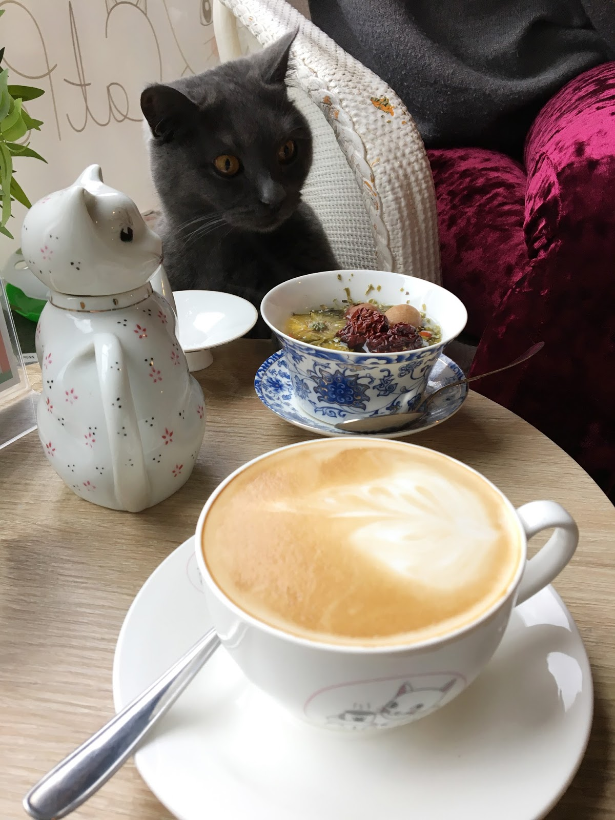 Hello Freckles Catpawcino Cat Cafe Newcastle Quayside nebloggers