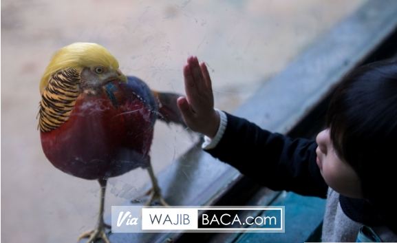 Punya Rambut Mirip Dengan Presiden Donald Trump Burung di China Ini Mendadak Viral