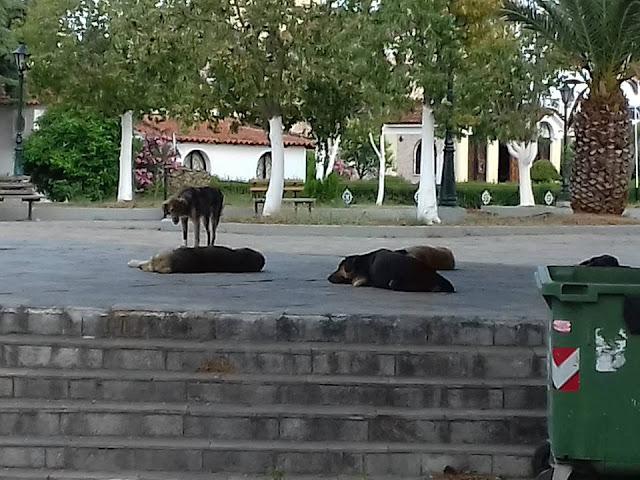 Καταγγελία για αγέλη αδέσποτων σκύλων στη Νέα Κίο