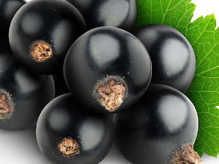 blackcurrant fruit images