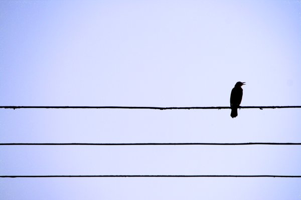 Sad Quotes Wallpapers For Iphone Lonely Sad Birds I M So Lonely
